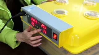 WQ-48 mini egg incubator