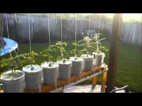 Trying Out Hydroponic Lettuce, Dutch Bucket Tomatoes, Kratky Method