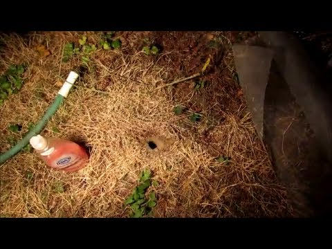 how to kill wasp yellow jacket ground nest video naturally using soap and water youtube. Black Bedroom Furniture Sets. Home Design Ideas