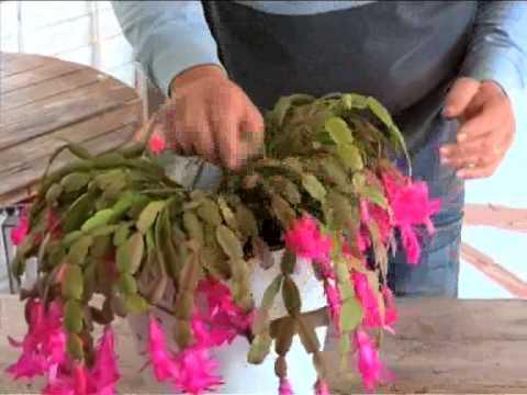 Express Garden Tips      Indoor Cactus  2 September 2014