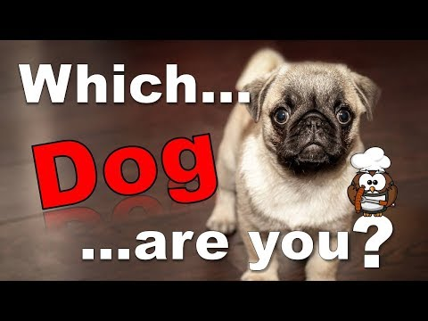 в Which Dog Are You? - Personality Test
