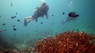 Scuba Diving in Koh Tao - White Rock
