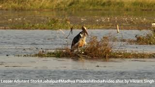 Lesser Adjutant Stork#Birdwatching#Travel#India
