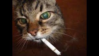 Смешное BEST видео про животных  Приколы с животными  Приколы про кошек 2017