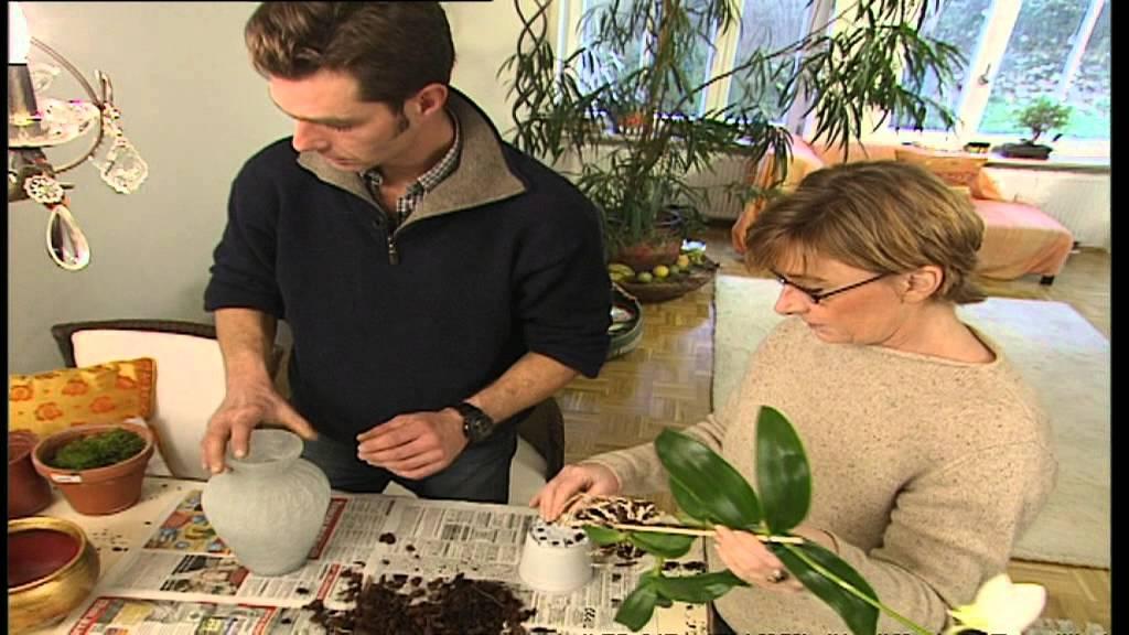 Deko Tipps Deko Aus Pflanzen G Rtner Tipps F R Das