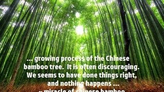 The Miracle of Chinese Bamboo | Inspiration