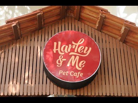 Cafe & Gue...