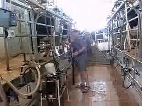 Dairy Farming in Israel Dairy Farm Negev Israel