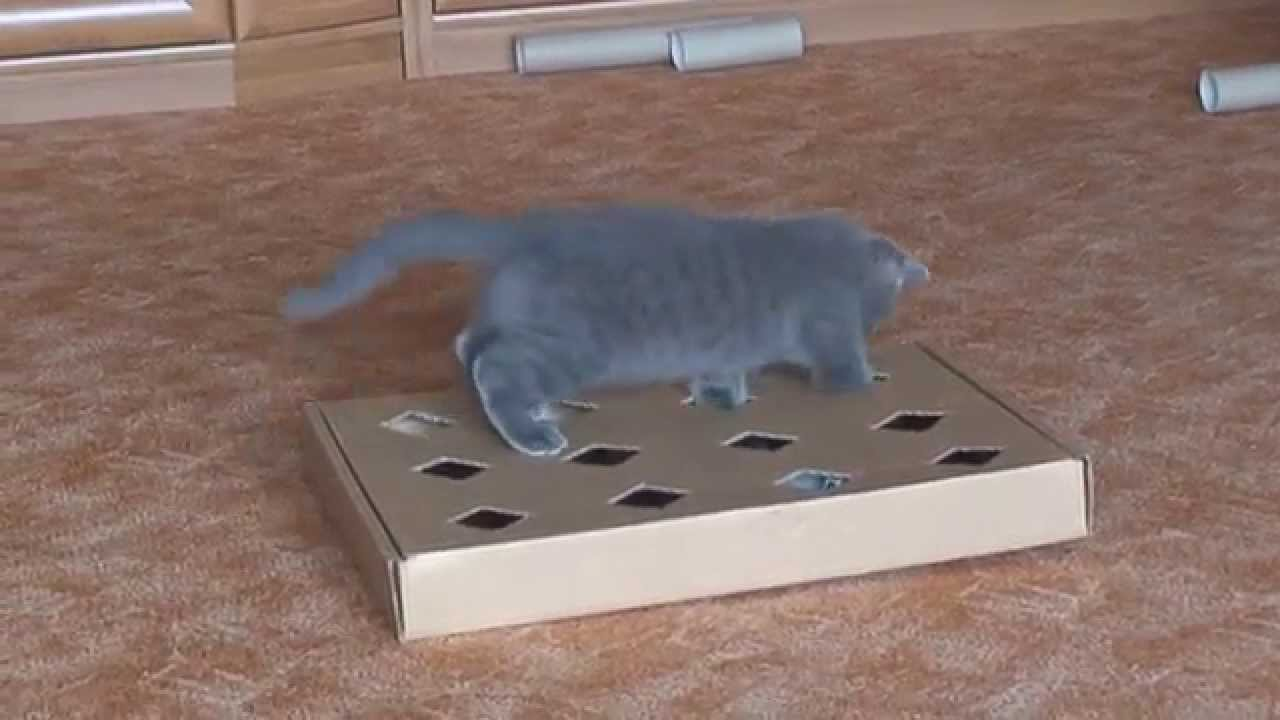 Кошки игрушки своими руками фото