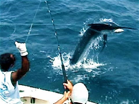 MARLIN Tries To JUMP In Boat! Tropic Star