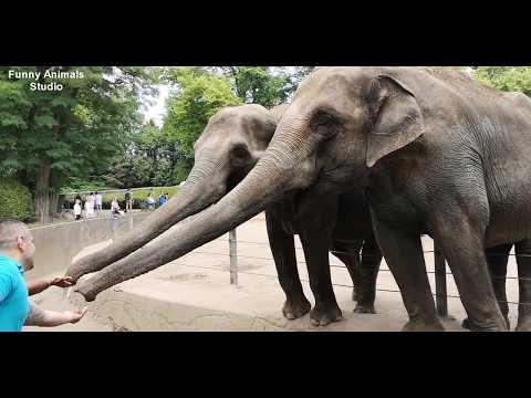 Слон помог рабочим отнести ведро