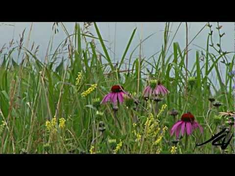 Travel Nebraska  HD - YouTube
