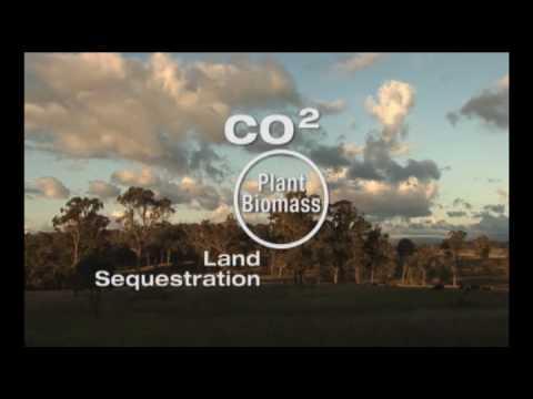 Plants are a bridge that connect atmospheric co2 with soil carbon