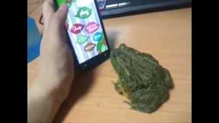 ගෙම්බෙක්ව තරහ ගස්සන මේ තරුණයාට අවසානයේ අත්වන ඉරණම බලන්න How to piss off a frog