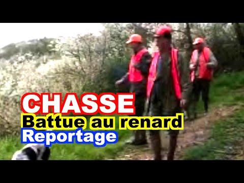 chasse-battue-de-rgulation-du-renard.html