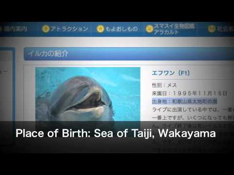 Taiji dolphin slaughter linked to captivity! A MUST SEE!