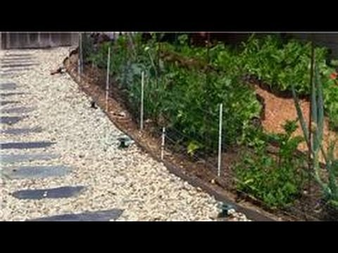 Vegetable gardening how do i keep raccoons out of vegetable gardens youtube How to keep raccoons out of garden