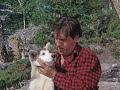 Nikki, Wild Dog Of The North - Trailer