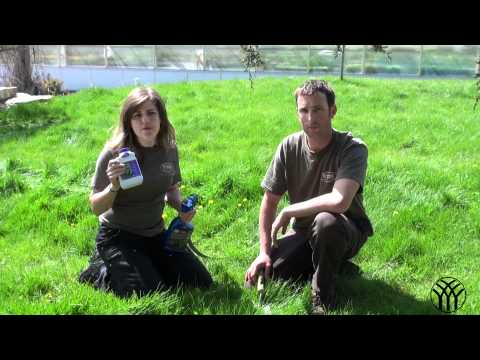 Dandelion Weed Control in Lawns - Mickman Brothers Landscape Maintenance