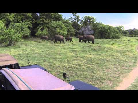 2013-09-02 - Safari - Xxx, Sri Lanka video