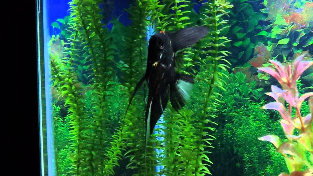 tropical fish images and names