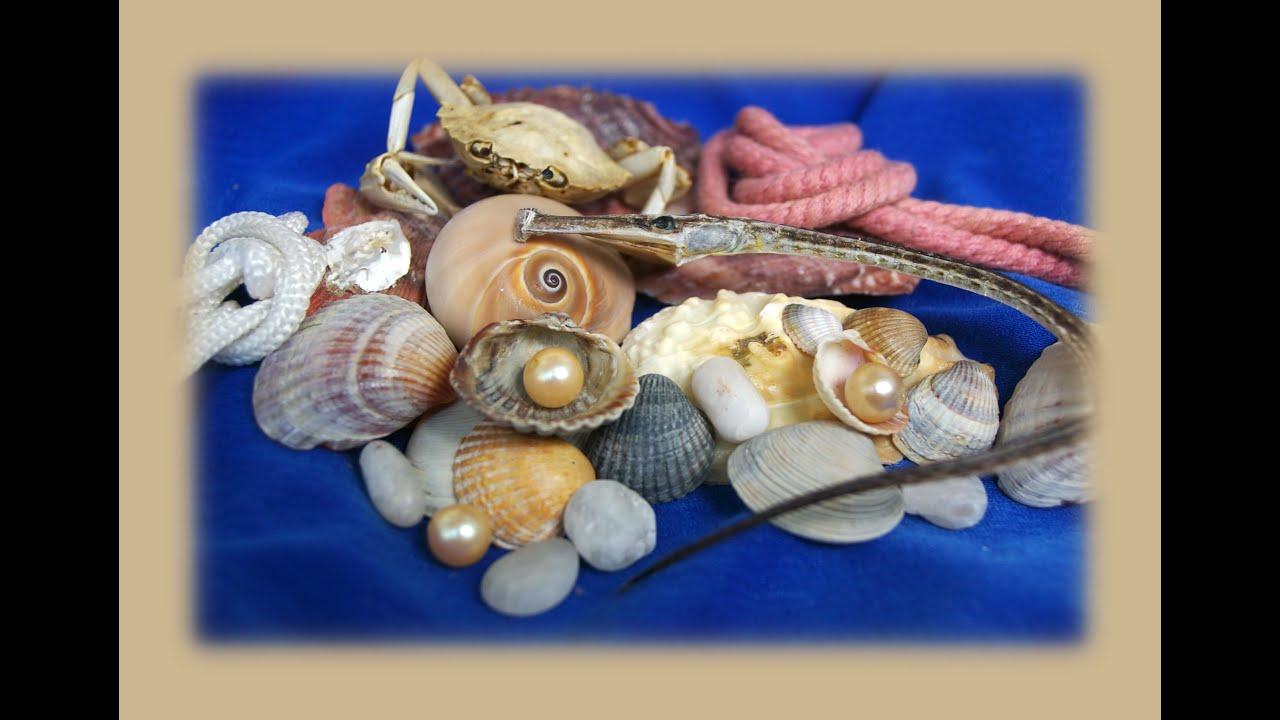 Подготовка морских ракушек к поделкам