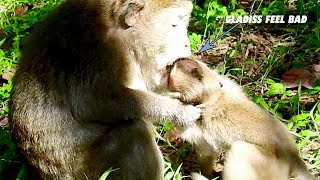 OMG! Why Gladiss MOnkey Feel So Bad Like This?, Catching Baby Monkey & Bite Baby & Push Down