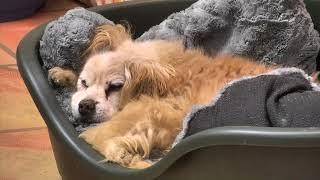 Senior Dog Gathering Room Cam 02-19-2018 16:12:27 - 17:12:28