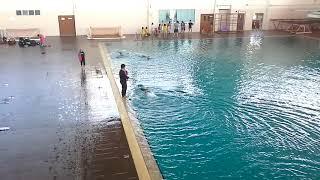 Latihan Swimming - Using the Floating Board