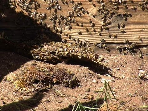 Continued Drought & Bees Dying = Famine!