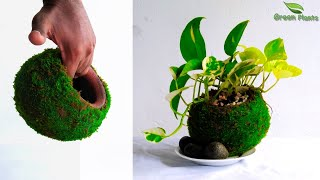 Moss Pot Making for Indoor Money Plants-Indoor Garden Idea-Money Plants Growing Idea//GREEN PLANTS