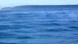 Fiji Surf - Solid Frigates from the Water