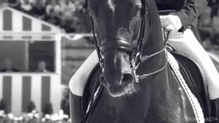 Equestrianism || Story with a Heartbeat
