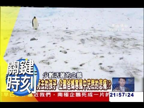 南極企鵝死成一片的沉默悲鳴!? 2011年 第0992集 2200 關鍵時刻
