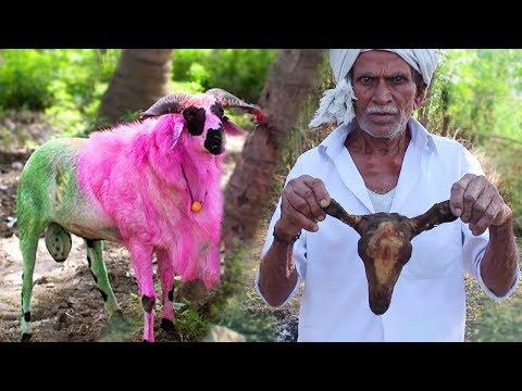తలకాయ కూర ఇలా తిన్నారో జన్మలో ఇంకొకటి తినాలనిపించదు | Goat head curry | Indian Village Style