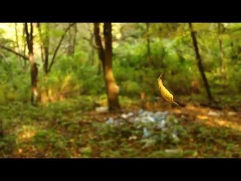 Антон Семёнов - Мой старый лес