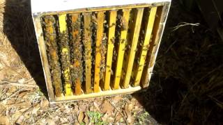 First Hive Split of The Year