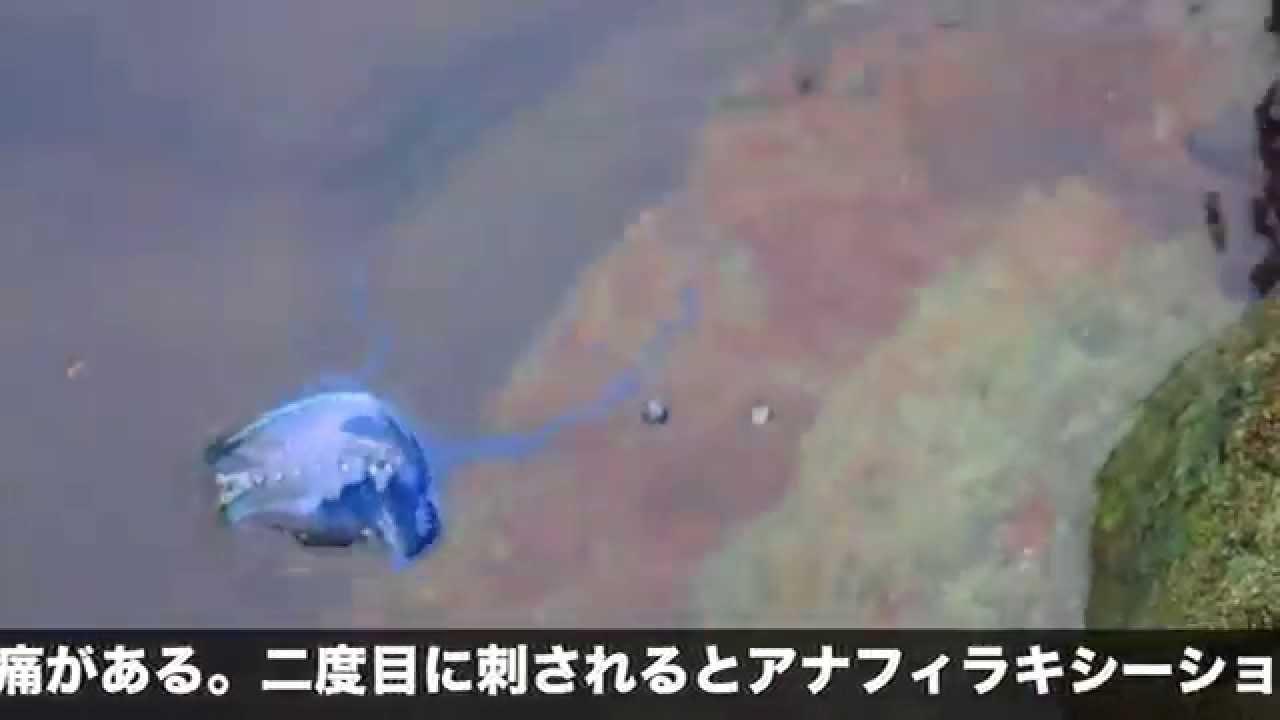 Miyakoの画像 p1_23