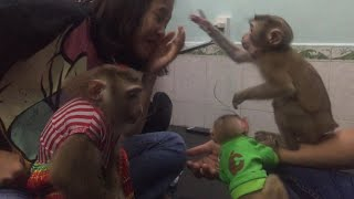 Baby Monkey Nui Comes home to Visit The Lala Monkey And Ruby Monkey