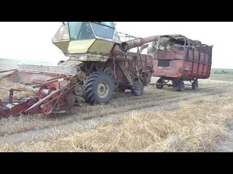 Уборка семян люцерны 2016 HARVEST ALFALFA SEEDS IN UKRAINE