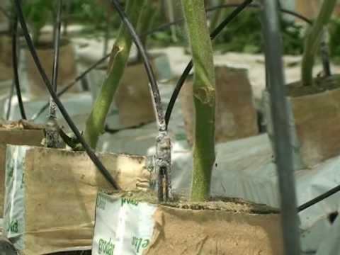 Az üvegházi termesztés II. rész