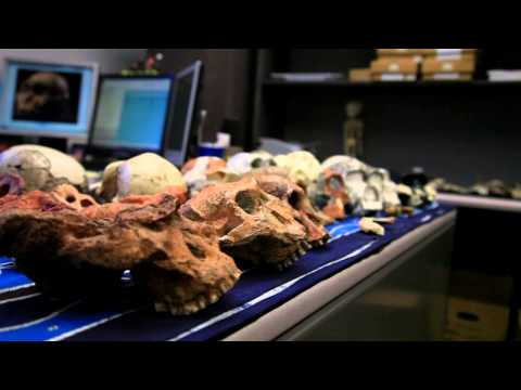 Texas A&M Anthropologist Darryl de Ruiter Discusses Hominin Find