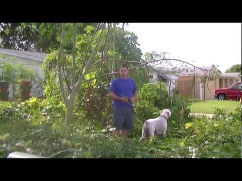 Holiday Oasis Garden: Florida Permaculture Suburban Homestead