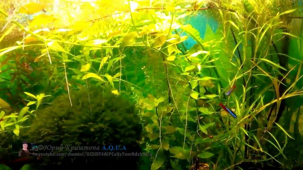 Как сажать аквариумные растения без корней 64