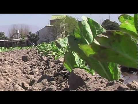 Eradicating Child Labour in Argentina's Tobacco Regions