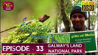 Sobadhara - Sri Lanka Wildlife Documentary | 2019-11-08 |  Galway's Land National Park