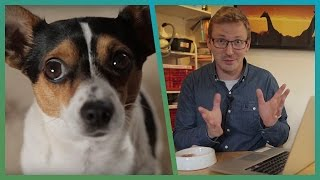 What Does Your Pet Do When Home Alone? - Cheap Shot Challenge - Earth Unplugged