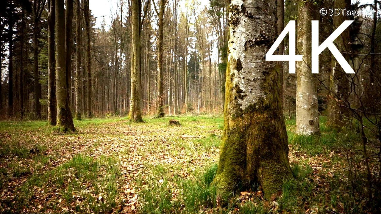 4k Video Uhd March Forest Walk Youtube