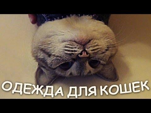 Сшить одежду кошке