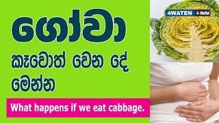 ගෝවා කෑවොත් වෙන දේවල් මෙන්න : Benefits of Cabbage